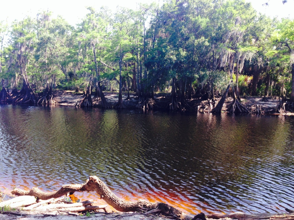 Rewilding Witchcraft: Speaking from the Swamp, Part1