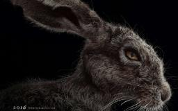 Film review: The Witch is a strong statement against patriarchy and for nature