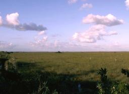 The God moves through the grassland